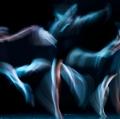 0002_foto-di-salvo-cafarelli-e-giovanna-di-bartolo_stelle-danzanti-13