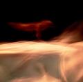 foto-di-salvo-cafarelli-e-giovanna-di-bartolo_stelle-danzanti-22