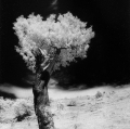 gabi_albero-frullato