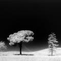 gabi_flora-sinfonia