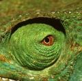 025_occhio-di-camaleonte-madagascar-cibachrome