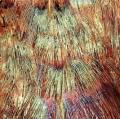 029_penne-di-fagiano-cibachrome-opacizzato