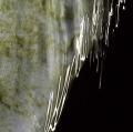 034_acqua-con-riflessi-di-luce-solare-cibachrome