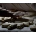 0008_maccarrone-iolanda_il-profumo-dei-ricordi