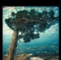 048_migliori_italian-sketahbook-lago-di-bolsena