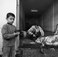 0030_cito_2005_01_20_010_09-palestina_gaza-city-eid-al-adha