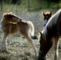 tani-cavallini-2