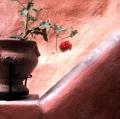 tani-vaso-e-fiore-rosso