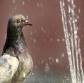 urso-alfio_sotto-la-doccia