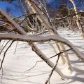drago-alessio_inverno-004