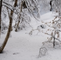 zimbone_inverno_01