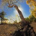 urso-alfio_autunno-al-citelli