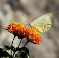 001_alfonzetti-davide-senza-titolo-la-primavera