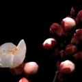 012_drago-alessio_primavera