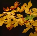 006_carciotto-enzo_autunno-09_002