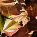 020_lo-giudice-marco_autunno1