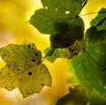 049_zimbone-autunno-3